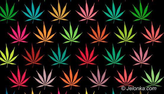 JELENIA GÓRA/KRAJ: Chcą legalizacji
