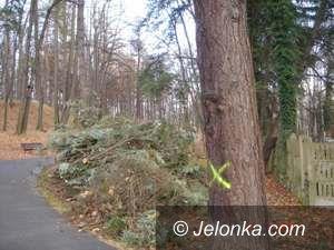JELENIA GÓRA: Wycinają zdrowe drzewa?