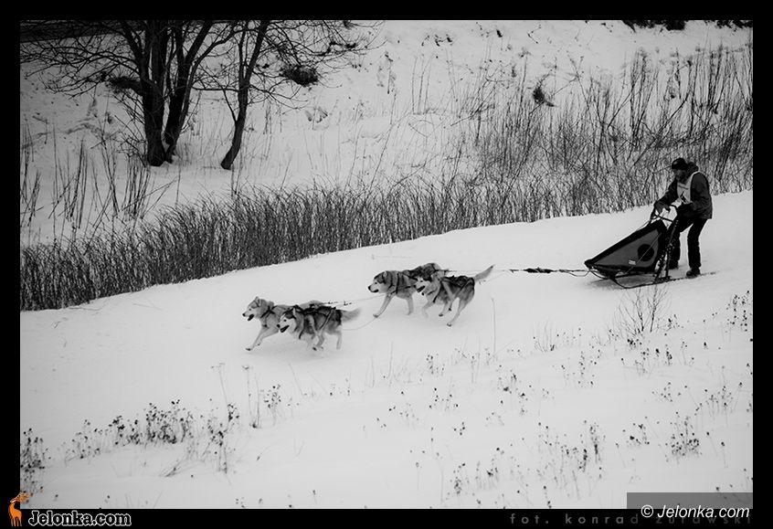 Karpacz: Pieskie zmagania z mrozem i śniegiem