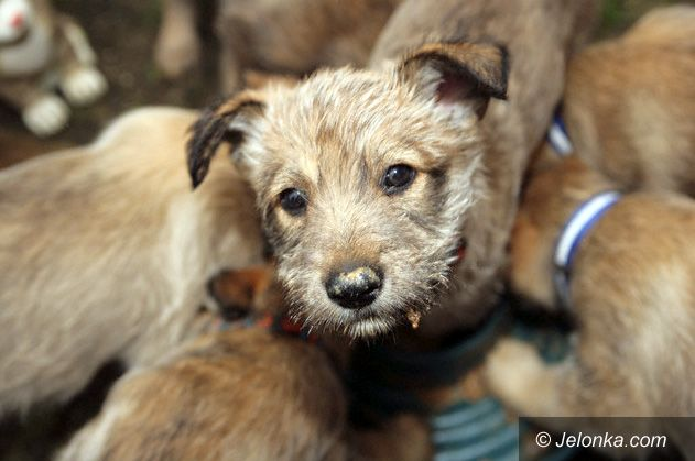 JELENIA GÓRA: Trują zwierzęta na Zabobrzu