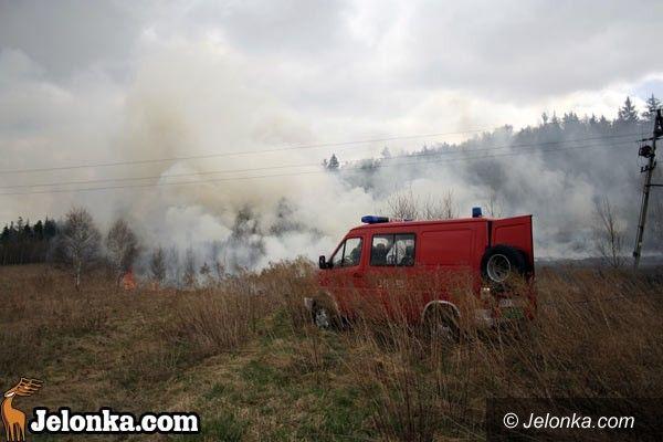 JELENIA GÓRA: Potężny pożar nieużytków
