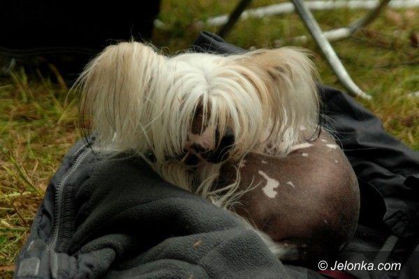 JELENIA GÓRA: Pogoda była pod pięknym psem