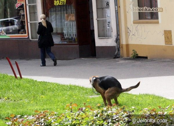 JELENIA GÓRA: Pieski szalet w mieście