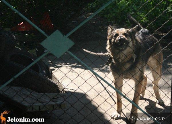 JELENIA GÓRA: Zwierzęta balastem do wyrzucenia