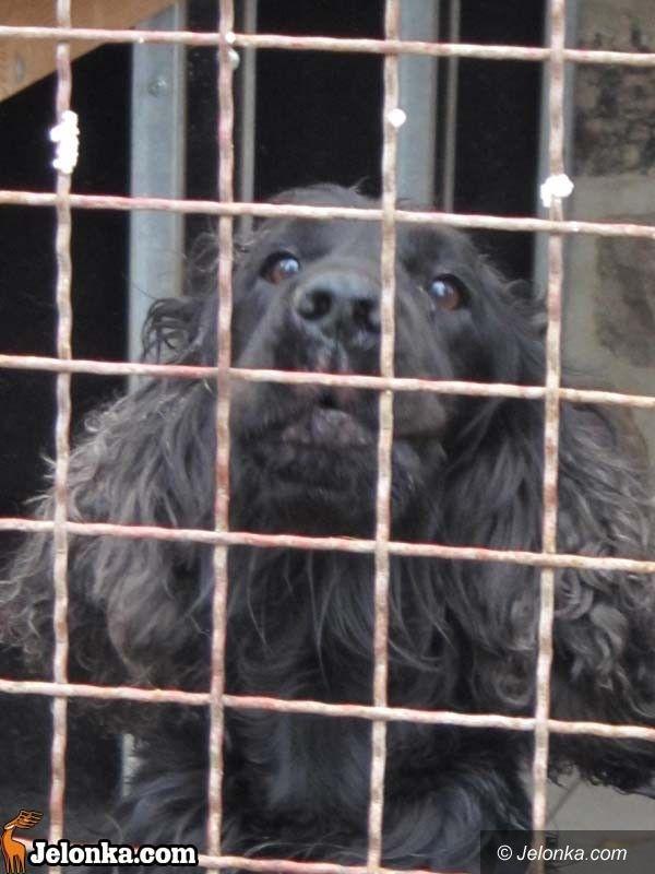 JELENIA GÓRA: Moc niemieckich prezentów dla bezdomnych zwierząt
