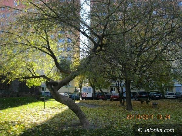 JELENIA GÓRA: Wycinają drzewa. Czy tylko chore i zagrażające bezpieczeństwu?