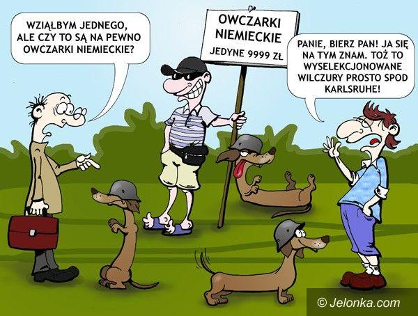JELENIA GÓRA: Scenka z psiego targu