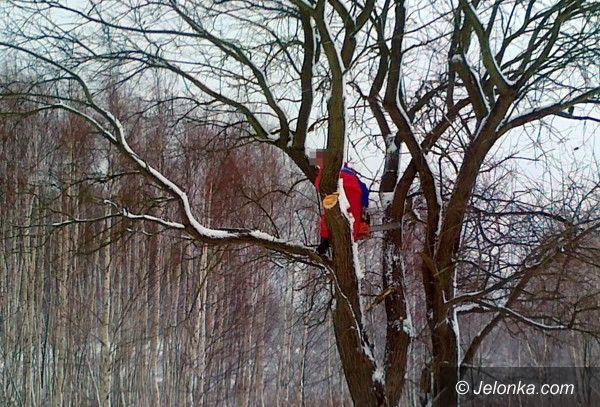 JELENIA GÓRA: Strażnicy złapali złodzieja drewna