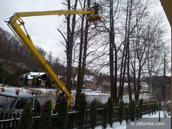 """REGION JELENIOGÓRSKI: Wycinka """"niebezpiecznych"""" drzew. Bo wyglądają na chore"""