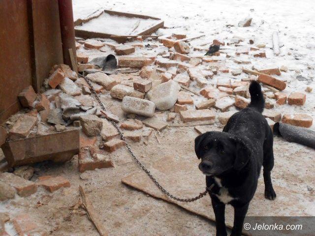 JELENIA GÓRA: Pies miał budę, ale ją zjadł – tłumaczył dręczyciel zwierzęcia