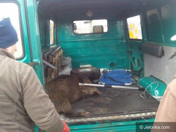 Jelenia Góra: Strażnicy na pomoc zwierzętom