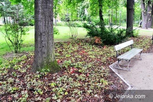 Jelenia Góra: Efektowne i rzadkie grzyby w Parku Zdrojowym