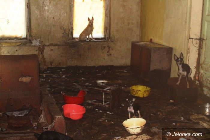 Jelenia Góra: 24 psy zamknięte w nieludzkich warunkach AKTUALIZACJA