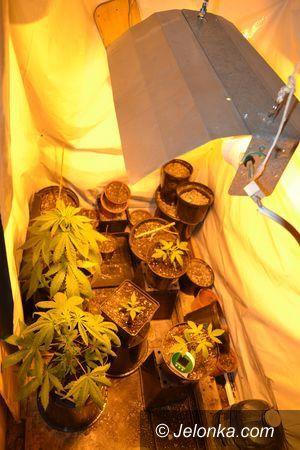 Jelenia Góra: Uprawiał marihuanę w garażu