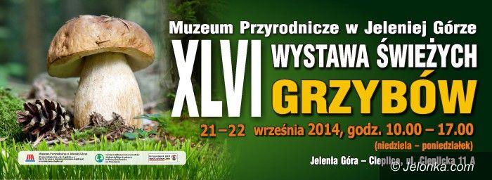 Jelenia Góra: Wystawa świeżych grzybów w Muzeum Przyrodniczym