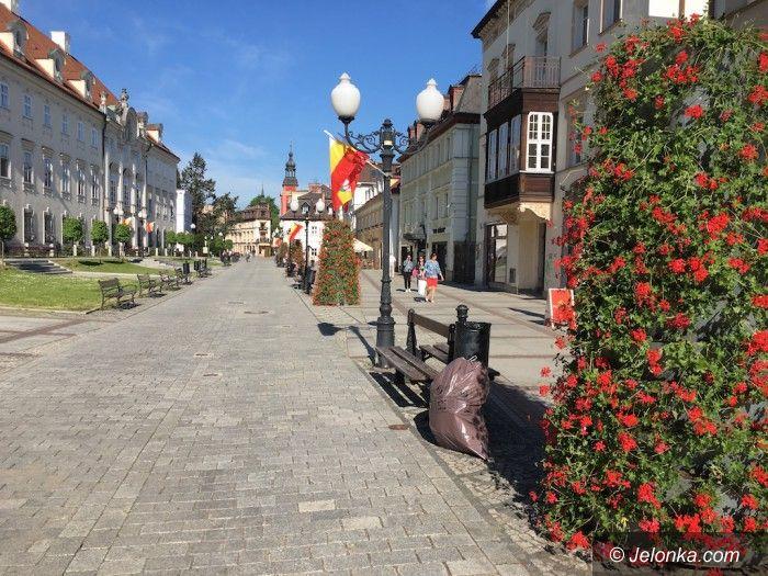 Jelenia Góra: W mieście zaczerwieniło się od pelargonii