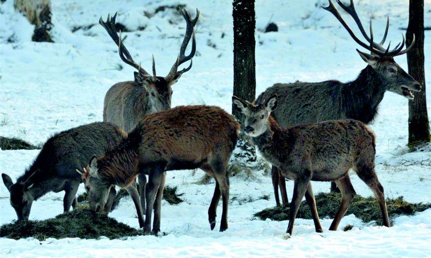 Region: Pomoc zwierzętom w zimie