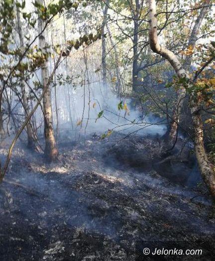 Jelenia Góra: Płonie młodnik na wzgórzu Gapy