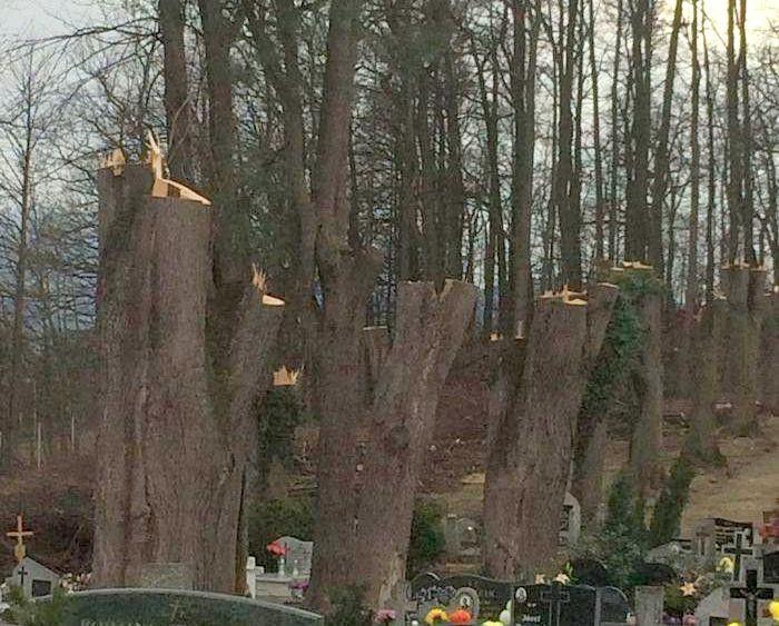 Bukowiec: Ogołocili drzewa