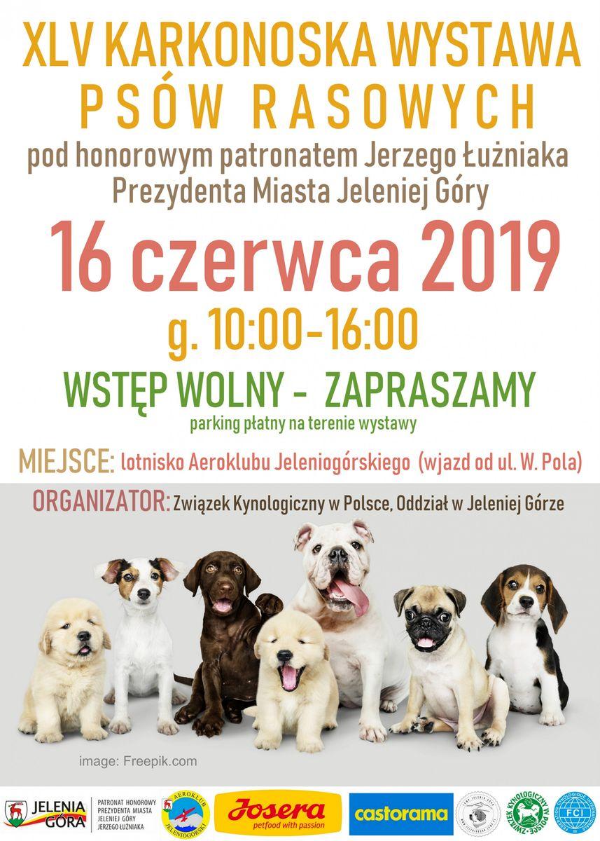 Jelenia Góra: Wkrótce kolejna wystawa psich piękności