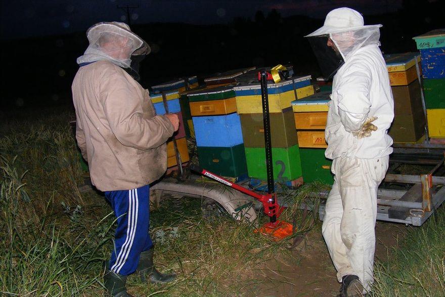Region: Kradzież pszczół