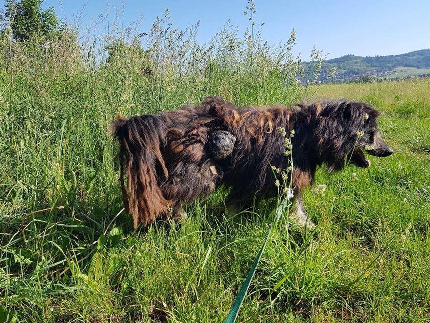 Jelenia Góra: Wyrok za znęcanie się nad psem