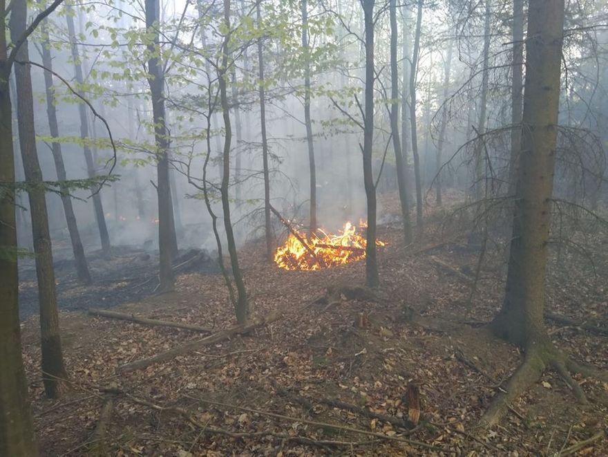 Region: Zakaz wstępu do Wielkiego Lubańskiego Lasu