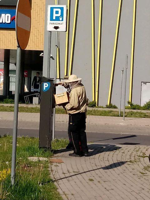 Jelenia Góra: Pszczoły na parkometrze