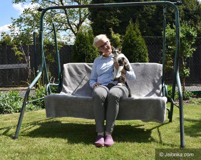 Jelenia Góra: Azyl dla skrzywdzonych kotów