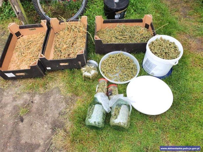 Bolesławiec: Miał 2 kg marihuany