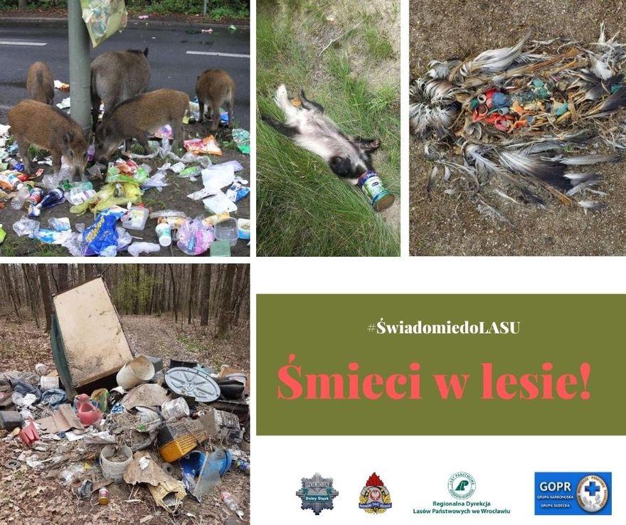 Region: Śmieci i wandale atakują lasy