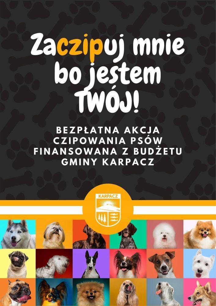 Karpacz: Bezpłatne czipy dla psów w Karpaczu