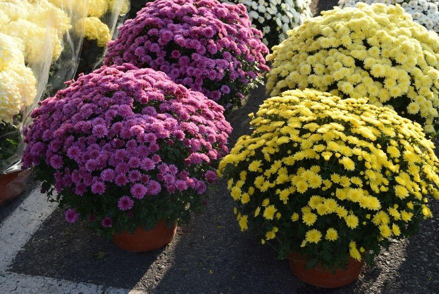 Lubań: Miasto odkupi kwiaty