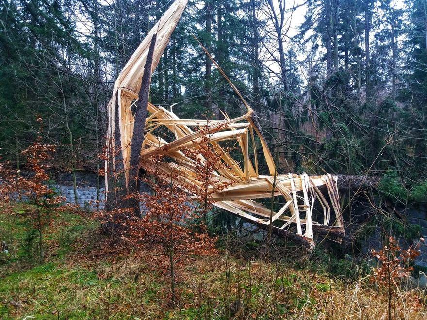Powiat: Zakaz wstępu do lasu