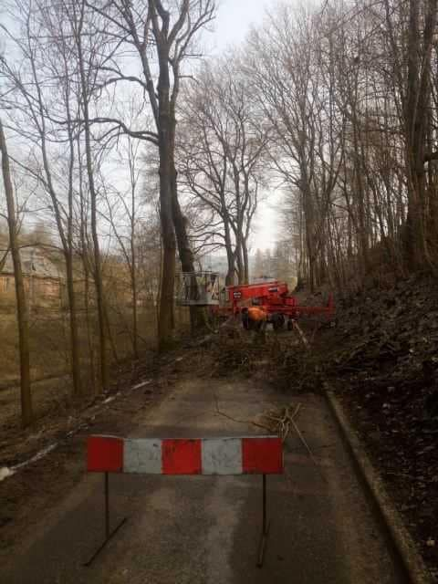 Chełmsko Śląskie: Trwa wycinka drzew