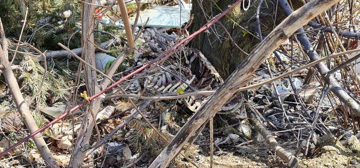 Wojieszyce: Cuchnące śmieci przy zajeździe