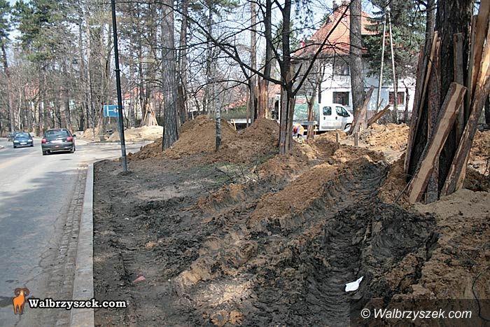 REGION, Szczawno-Zdrój: Wytną tylko 10 drzew