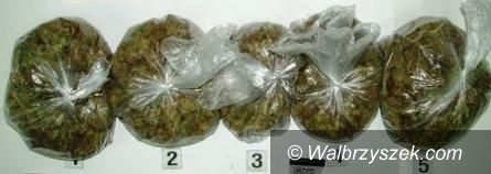 REGION, Boguszów-Gorce: Marihuana nie trafi do obiegu