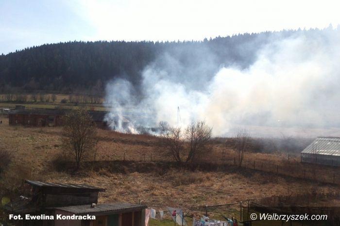 REGION, Głuszyca: Pierwsza ofiara wypalania traw