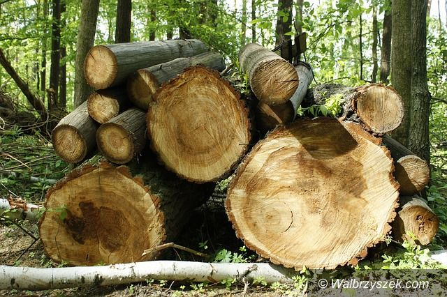 Wałbrzych: Kradli drewno