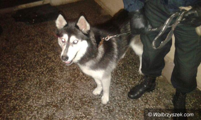 Wałbrzych: Trzy psy uciekły swoim właścicielom