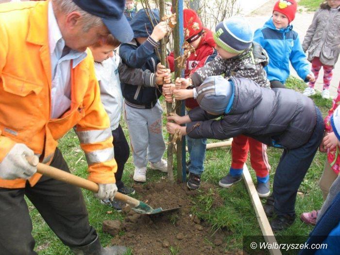 Wałbrzych: Sadzenie drzew na osiedlu Podzamcze