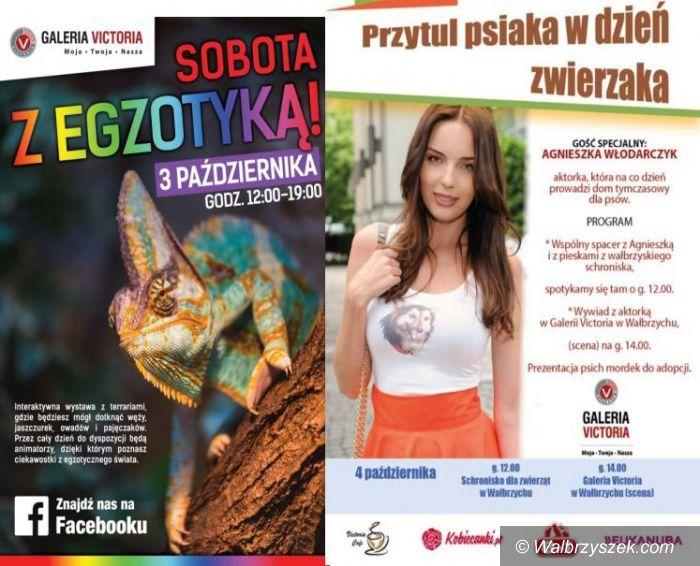 Wałbrzych: Egzotyczna Sobota i Agnieszka Włodarczyk w Galerii Victoria