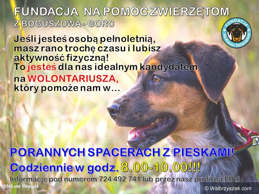 REGION, Boguszów-Gorce: Zostań wolontariuszem Fundacji Na Pomoc Zwierzętom i pomagaj wyprowadzając psiaki