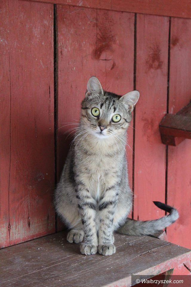 Wałbrzych: Kotów w schronisku więcej niż zwykle