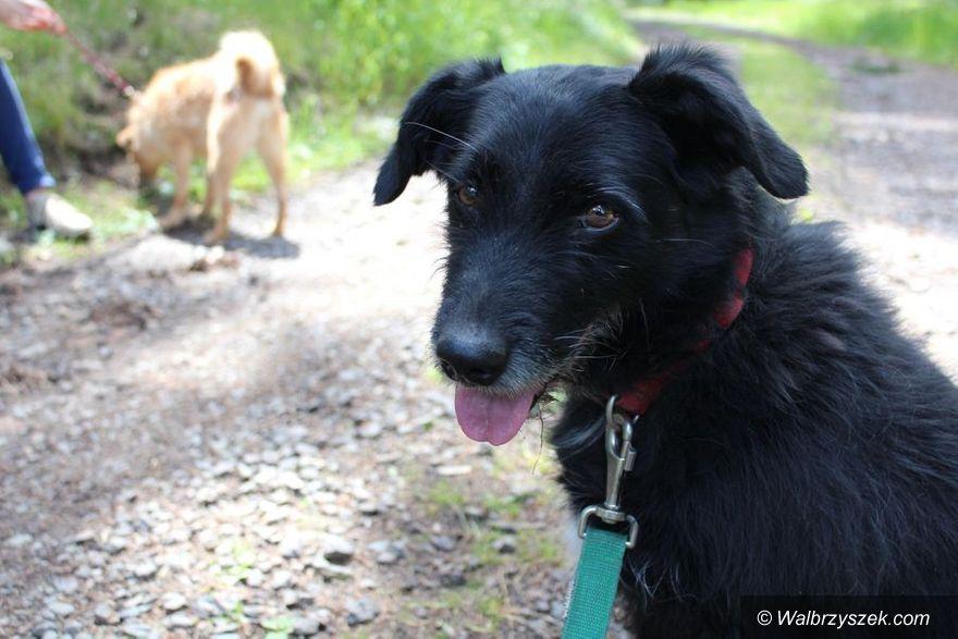 Wałbrzych: Diego to przyjaźnie nastawiony pies