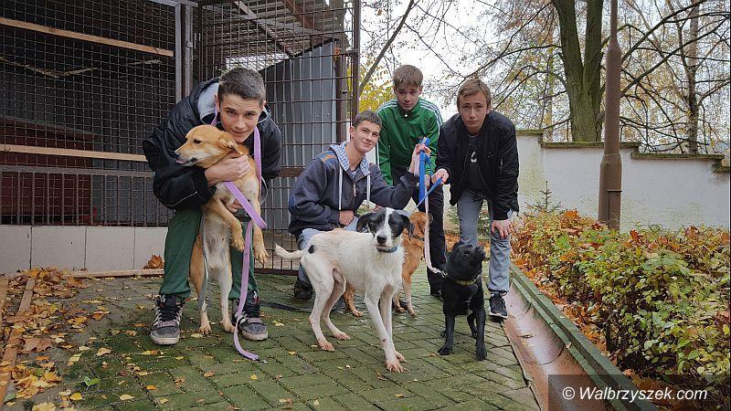 Wałbrzych: Aktywna młodzież z Młodzieżowego Ośrodka Wychowawczego