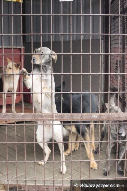 Wałbrzych: Domy tymczasowe dla psów