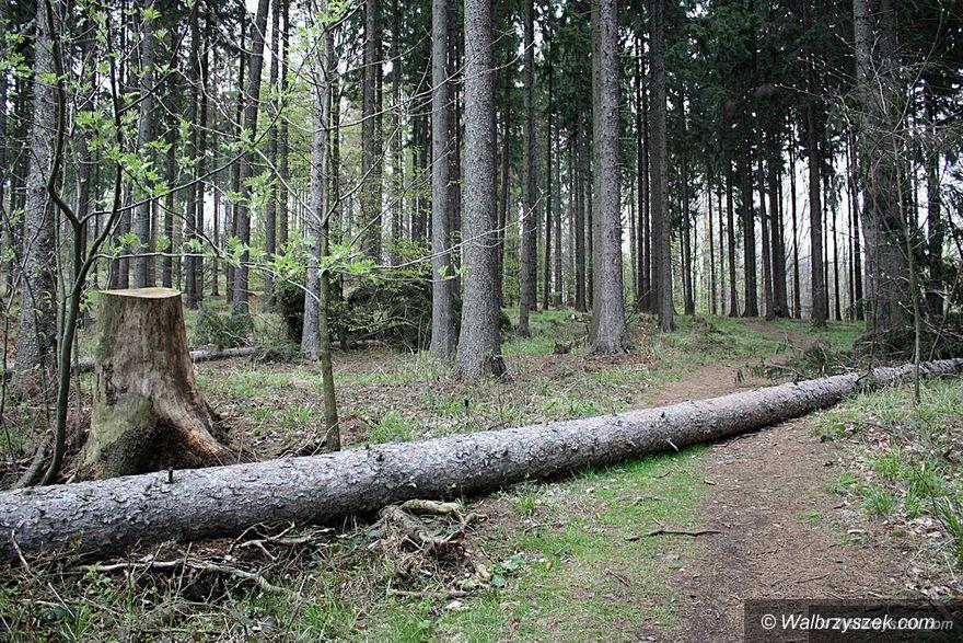 Kraj: Nowe przepisy dotyczące wycinki drzew