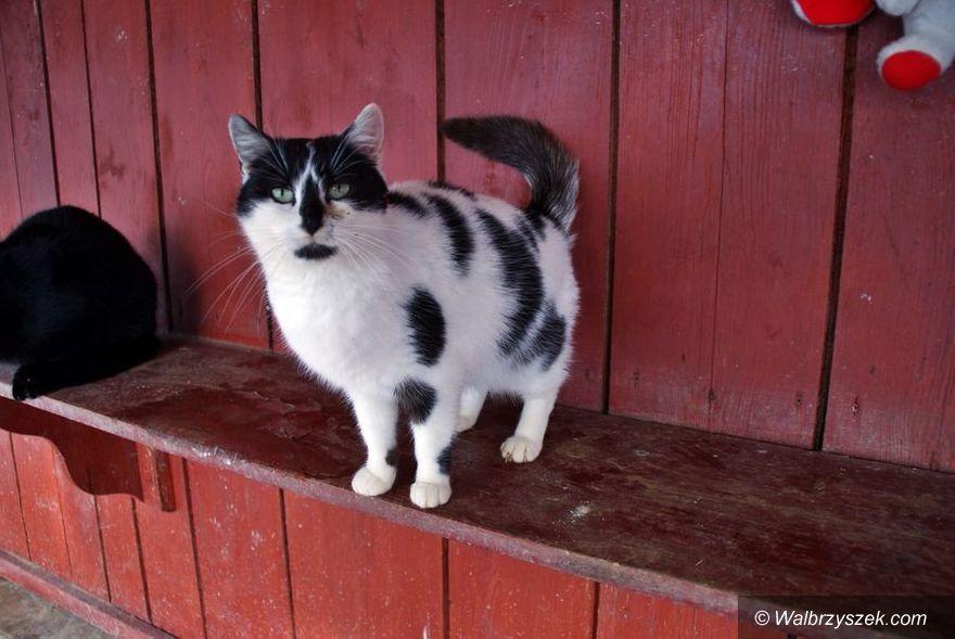 Wałbrzych: Kotka czeka na nowy dom